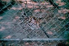 animal-fencing